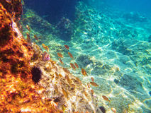 Vista subacquea del mare adriatico blu Fotografie Stock
