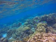 Vista subacquea del mare, barriere coralline Fotografia Stock Libera da Diritti