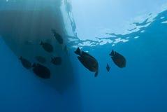 Vista subacuática de la silueta del barco con los pescados. Foto de archivo