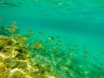 Vista subacuática del bajío de los pescados fotos de archivo