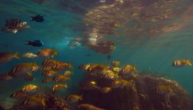 Vista subaquática Fotos de Stock Royalty Free