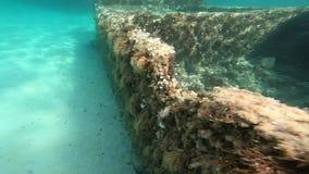 Vista submarina de ruinas en la costa de Cerdeña con los pescados en la cámara lenta metrajes