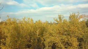 Vista suburbana superior de árvores bonitas durante um dia nebuloso do outono filme
