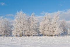 Vista sugli alberi di inverno Immagine Stock