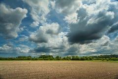 Vista sui giovani raccolti coltivati del cereale Fotografia Stock