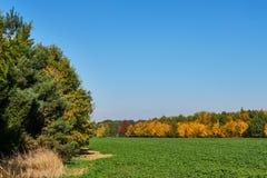 Vista sul campo e sugli alberi in autunno fotografie stock libere da diritti