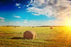 Vista sul campo raccolto con le balle della scaletta del instagram della paglia Fotografia Stock