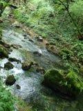 Vista sul fiume in foresta Immagine Stock