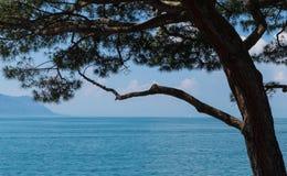 Vista sul lago Lemano e sul pino Fotografia Stock Libera da Diritti