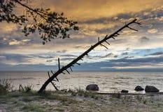 Vista sul Mar Baltico ad alba, Kurzeme, Lettonia Fotografia Stock Libera da Diritti
