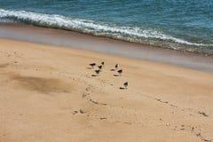 Vista sul mare con gli uccelli Immagine Stock Libera da Diritti