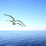 Vista sul mare con i gabbiani Fotografia Stock