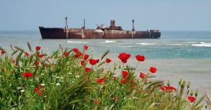 Vista sul mare con i papaveri immagine stock libera da diritti