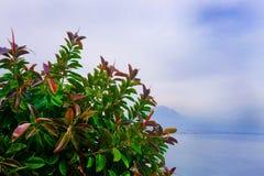 Vista sul mare con i verdi nella priorità alta Fotografie Stock Libere da Diritti