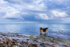 Vista sul mare con il cane che gioca nell'acqua Immagini Stock