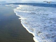 Vista sul mare con il gabbiano di mare Fotografie Stock