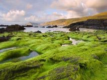 Vista sul mare con le alghe nella priorità alta. Fotografie Stock Libere da Diritti