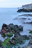 Vista sul mare con le alghe verdi Immagine Stock Libera da Diritti