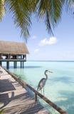 Vista sul mare dei Maldives Fotografia Stock Libera da Diritti