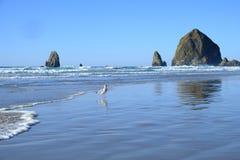 Vista sul mare dell'oceano con le grandi formazioni rocciose e un gabbiano nella priorità alta immagini stock