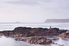 Vista sul mare della Cornovaglia e cormorant appollaiato. Immagini Stock Libere da Diritti