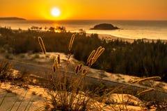 Vista sul mare della natura con la vista del Sun d'ardore attraverso Bush selvaggio ad alba arancio splendida fotografia stock