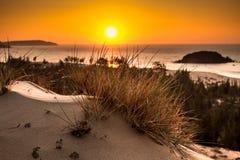 Vista sul mare della natura con la vista del Sun d'ardore attraverso Bush selvaggio ad alba arancio splendida immagini stock