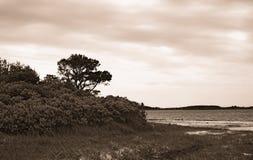 Vista sul mare di Assateague Immagine Stock Libera da Diritti