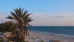 Vista sul mare di mattina con le palme sulla spiaggia sabbiosa con il mare ed il cielo blu video d archivio