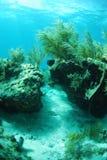 Vista sul mare e piante gorgonian Immagini Stock Libere da Diritti