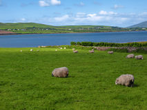 Vista sul mare litoranea scenica irlandese vibrante Fotografie Stock Libere da Diritti
