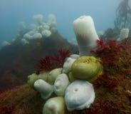 Vista sul mare nell'acqua pacifica fredda della baia California di Monterey immagini stock