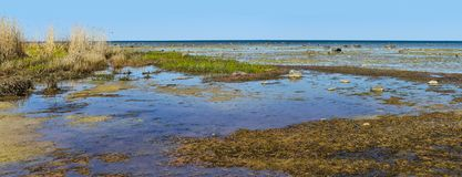 Vista sul mare panoramica della palude vergine con le piccole isole in Estonia Immagine Stock Libera da Diritti