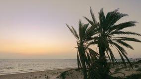 Vista sul mare sola con le foglie delle palme di cui che ondeggiano sul vento stock footage