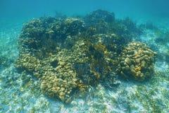 Vista sul mare subacquea sopra la piccola barriera corallina Immagini Stock Libere da Diritti