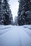 Vista sul modo nevoso della foresta del pino di inverno scenico in alpi julian in bianco e nero con il filtro blu, Slovenia Immagini Stock Libere da Diritti