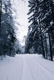 Vista sul modo nevoso della foresta del pino di inverno scenico in alpi julian in bianco e nero, la Slovenia Fotografia Stock