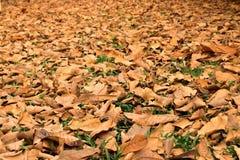 Vista sul terreno coperto di foglie asciutte cadute Fotografia Stock