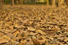 Vista sul terreno coperto di foglie asciutte cadute Immagini Stock Libere da Diritti