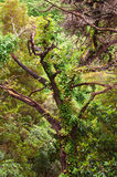 Vista sull'albero sfrondato con i rami lunghi Fotografia Stock Libera da Diritti
