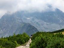 Vista sull'itinerario fra il riparo di Polana Jaworzynka e di Murowaniec in Tatra in Polonia Immagine Stock Libera da Diritti