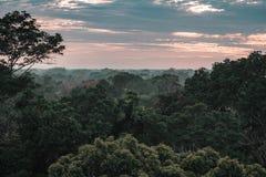 Vista sulla foresta pluviale di Amazon durante il tramonto fotografia stock