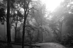 Vista sulla foresta verde nebbiosa Fotografia Stock