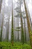 Vista sulla foresta verde nebbiosa Immagini Stock