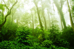 Vista sulla foresta verde nebbiosa Immagini Stock Libere da Diritti