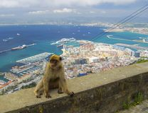 Vista sulla parte del nord di Gibilterra con il macaco Fotografie Stock