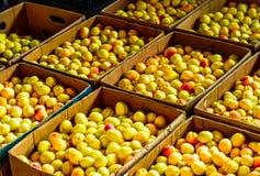 Vista sulle albicocche organiche fresche nel mercato di Yerewan, Armenia fotografia stock libera da diritti