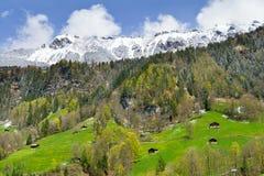 Vista sulle alpi nella regione di Jungfrau, Svizzera Fotografia Stock