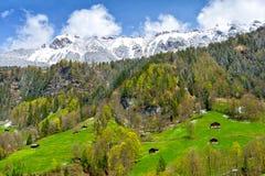 Vista sulle alpi svizzere nel villaggio di Lauterbrunnen, regione di Jungfrau, Svizzera Fotografie Stock Libere da Diritti