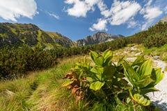 Vista sulle alte montagne di Tatra Immagini Stock Libere da Diritti